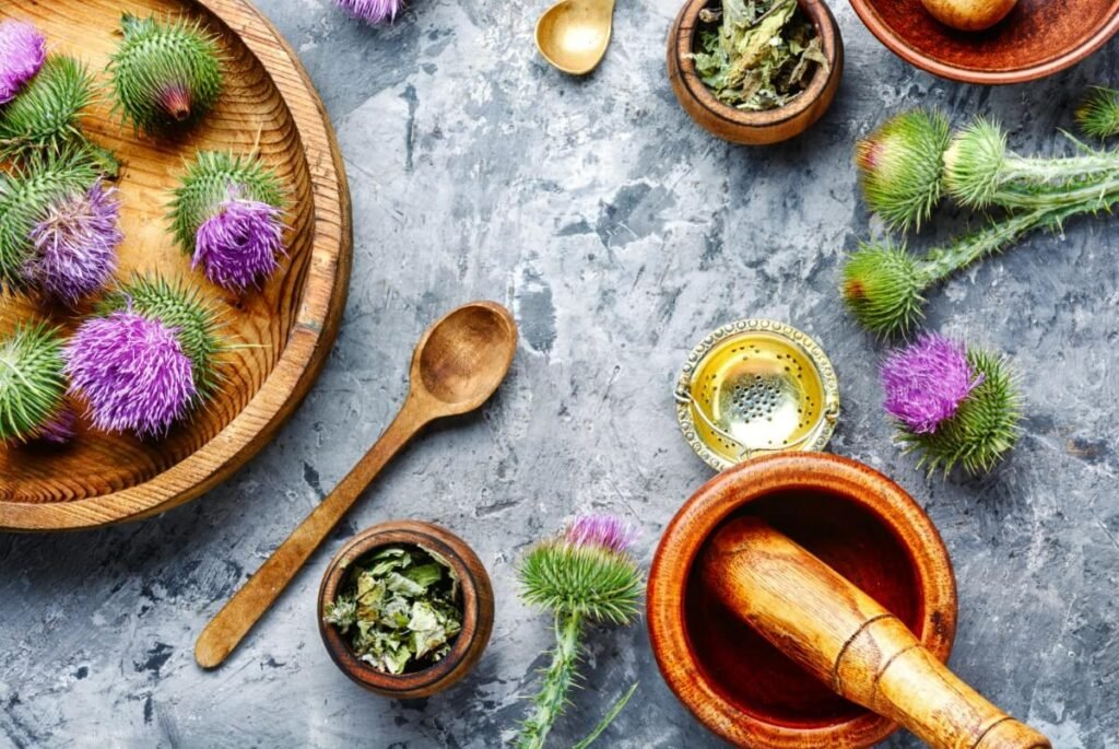 Uses and Benefits of Thistle Flowers