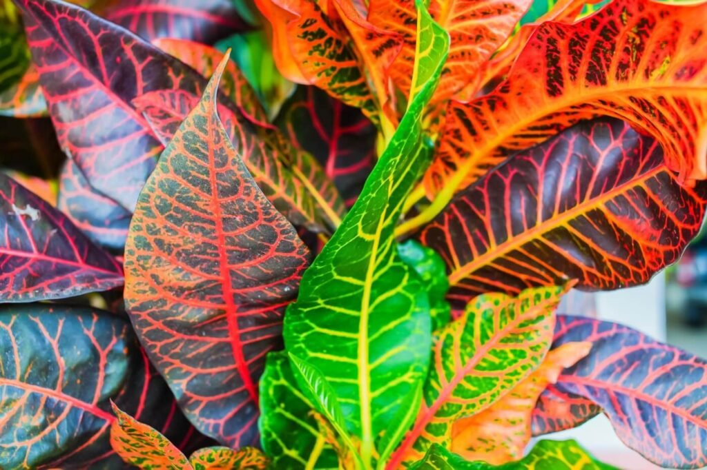 17 Best Types of Croton Plants to Grow at Home