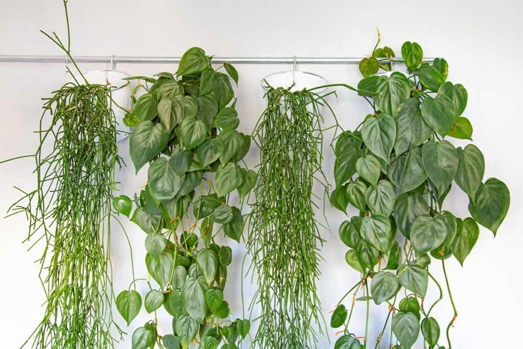 About Indoor Hanging Plants