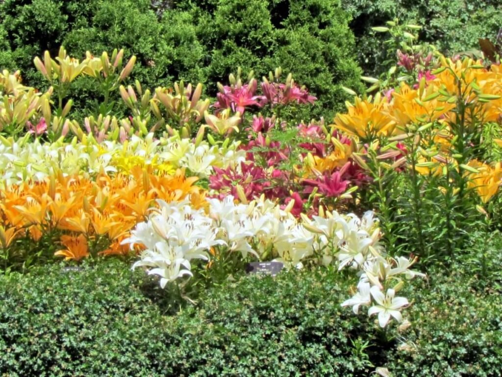 Bloom Time and Flowering Season
