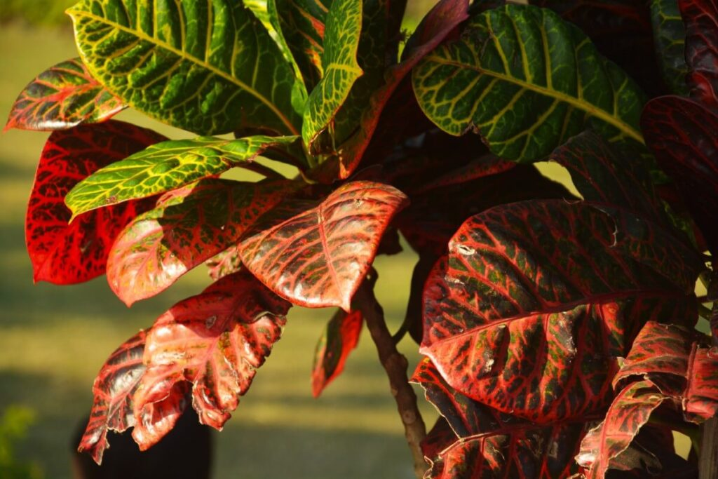 Common Croton Plant Problems & How to Treat Them