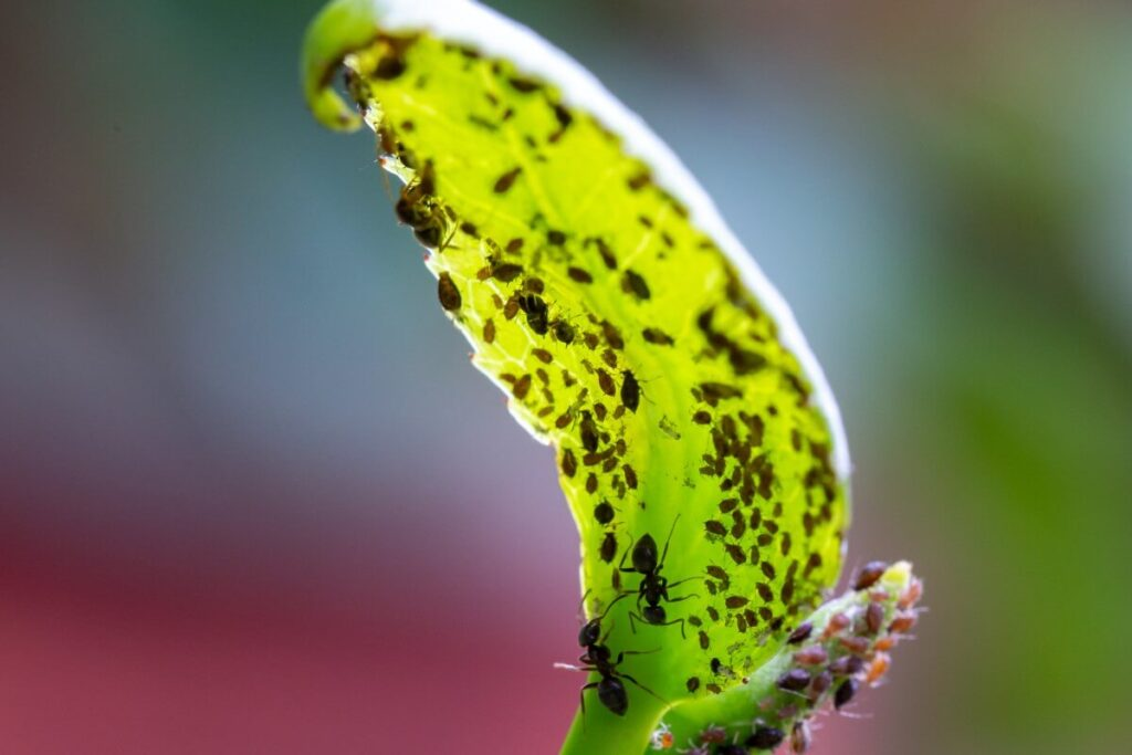 Common Pests & Diseases