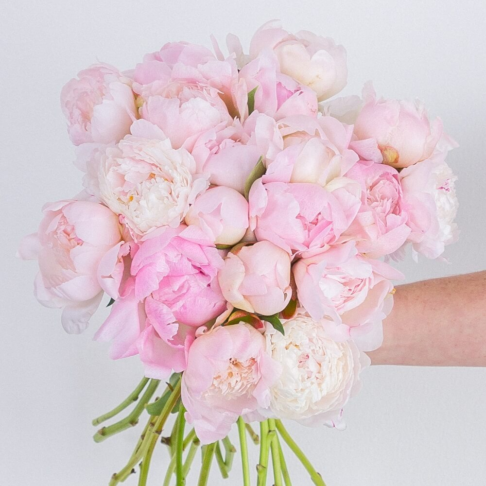 Ode a la Rose Flower Subscription Service Delivering Nationwide in the USA
