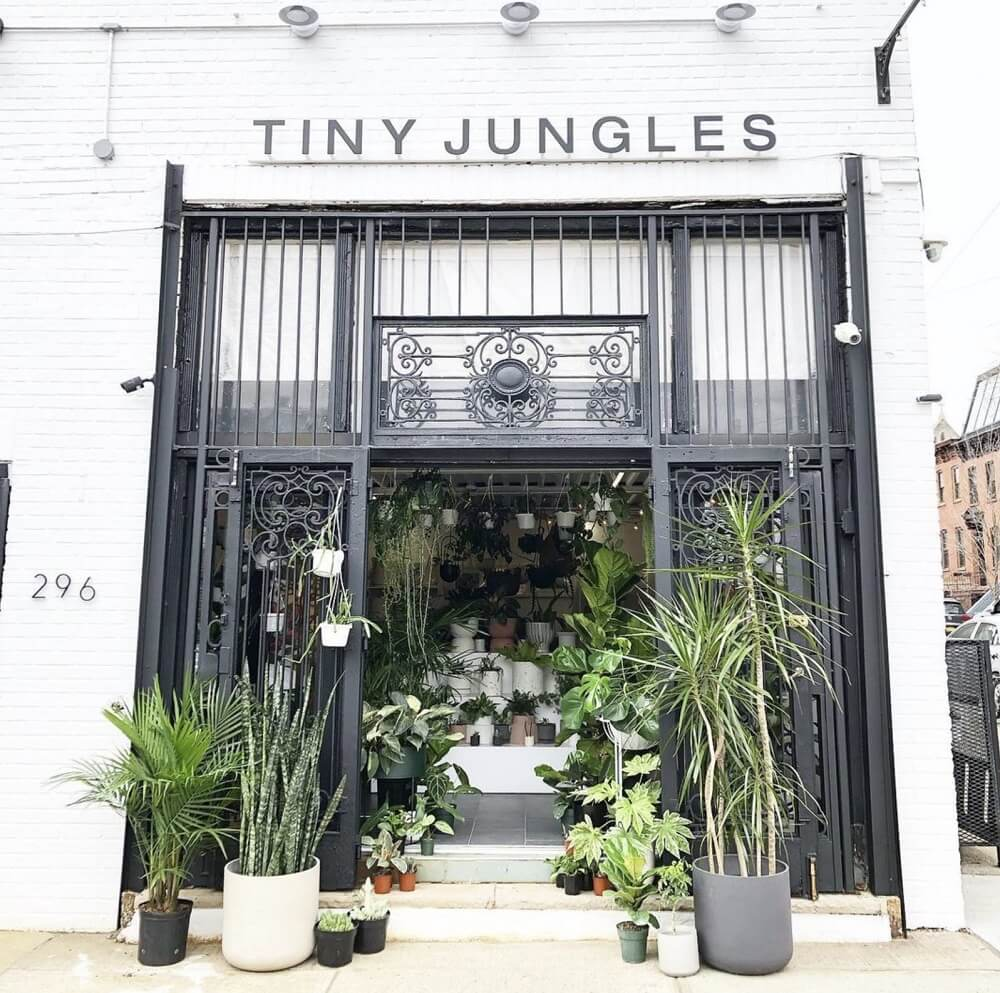 Tiny Jungles NYC plant shop and studio in Brooklyn, New York