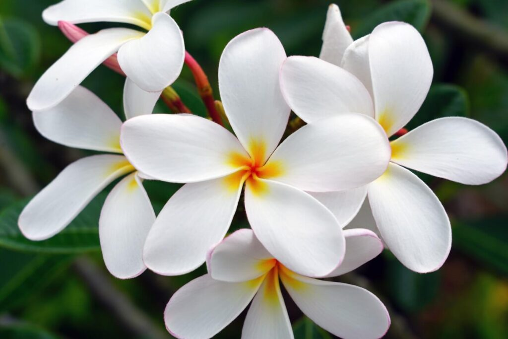 The 19 Most Fragrant White Flowers