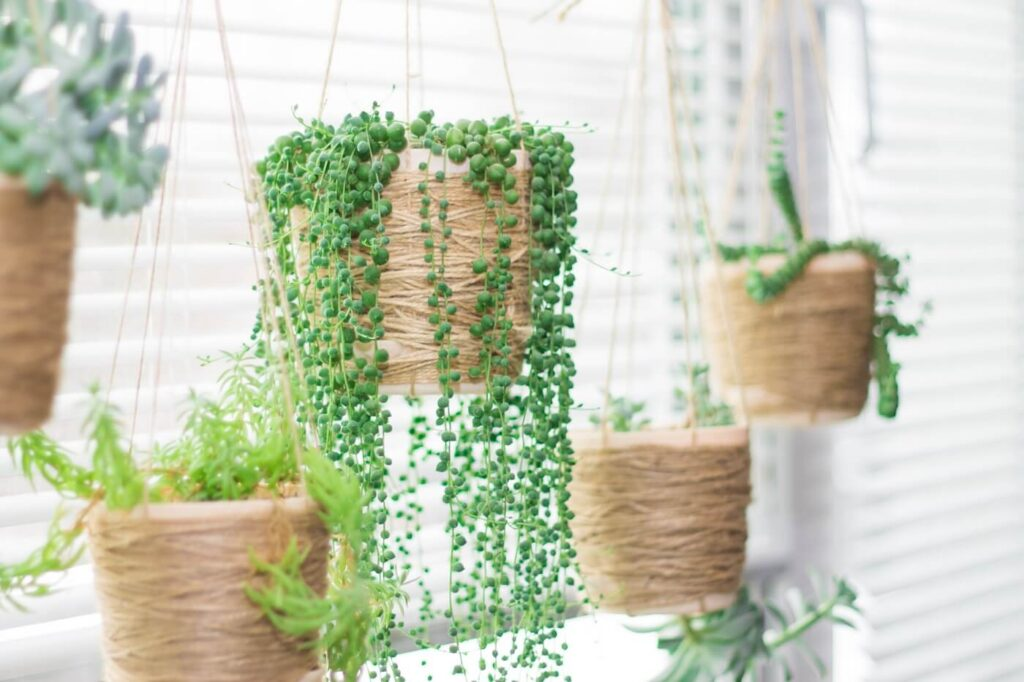 The Best Indoor Hanging Plants for the Home or Office