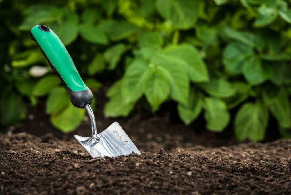The Best Soil for Geranium Orion
