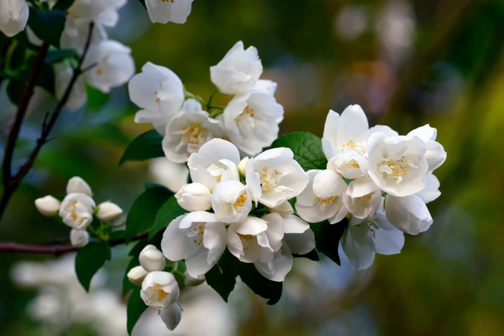 What Makes Flowers Fragrant?