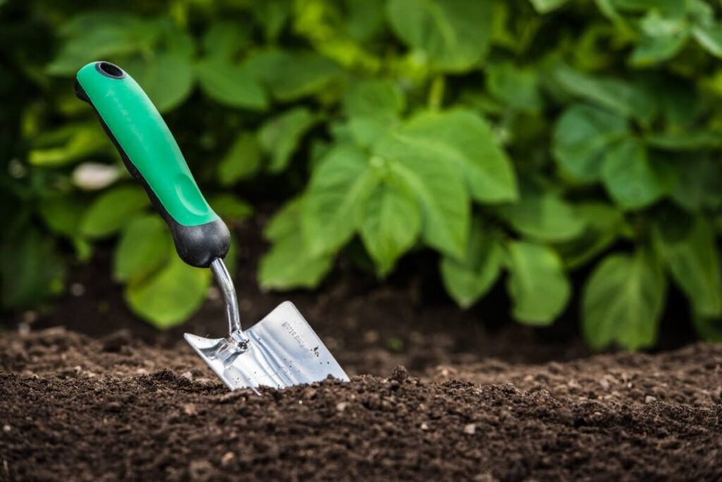 What's the Best Soil?