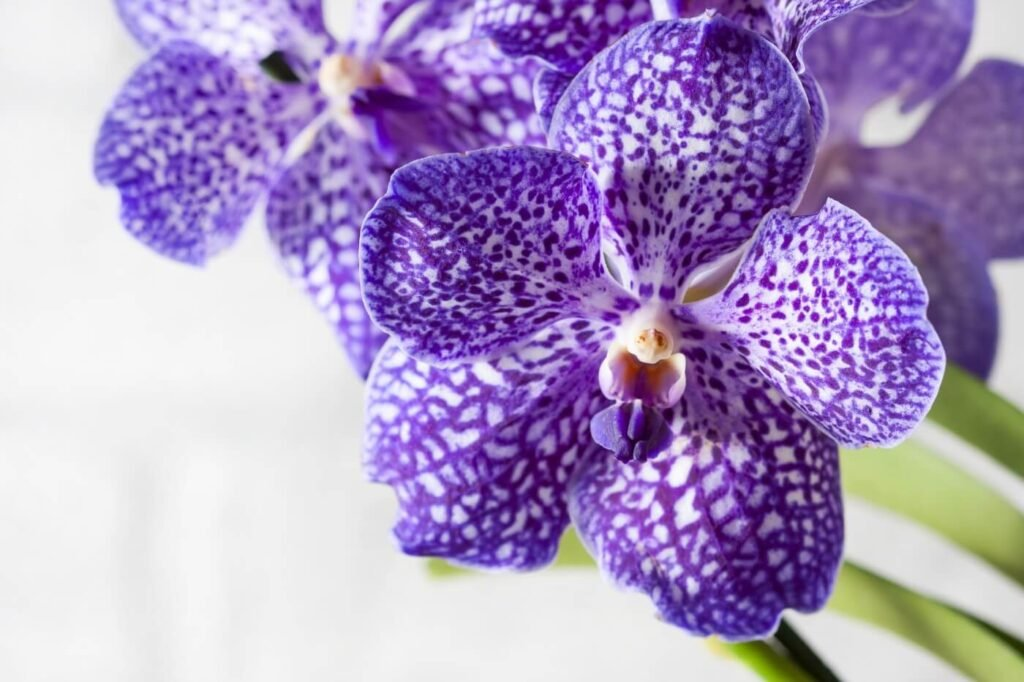 10 Best Types of Vanda Orchids to Grow at Home