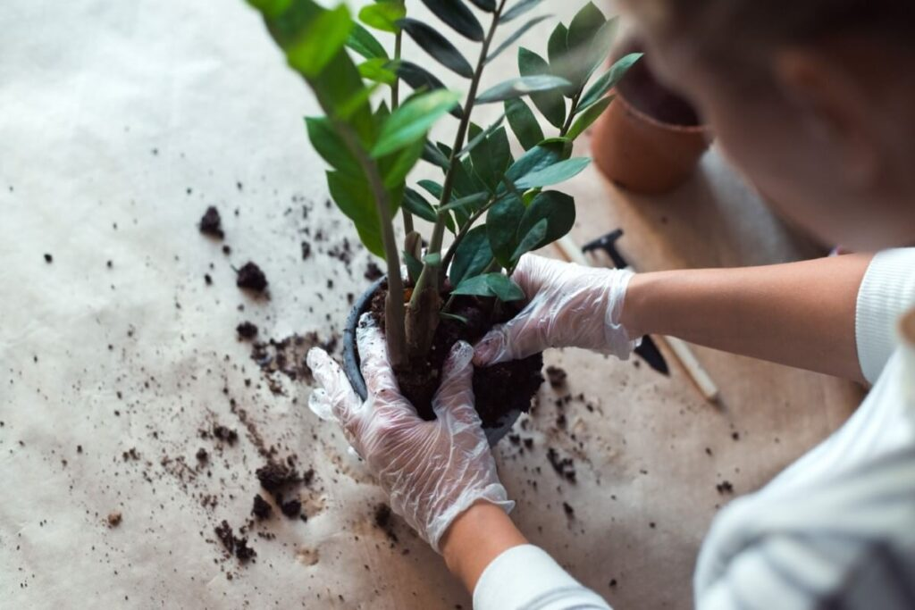 How Do You Mix Soil for ZZ Plants?