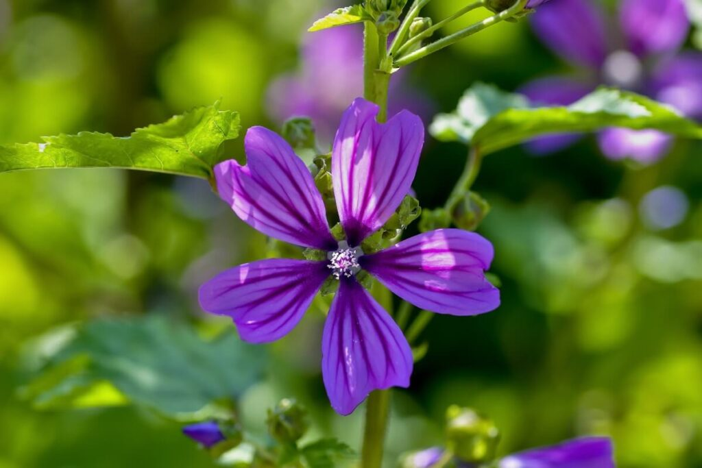 Mallow Flower References in the Bible