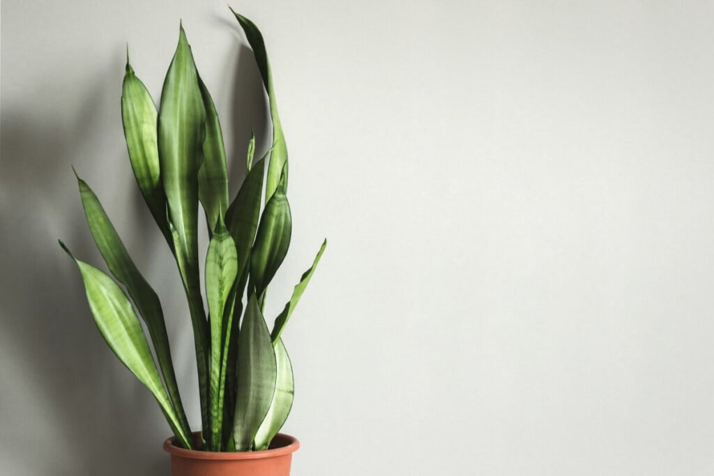 Signs You're Using the Wrong Soil Mix for Snake Plants