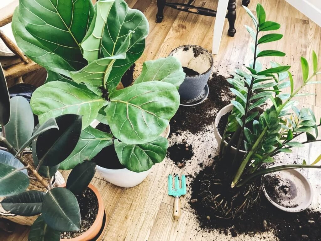 The Best Potting Soil for Repotting ZZ Plants