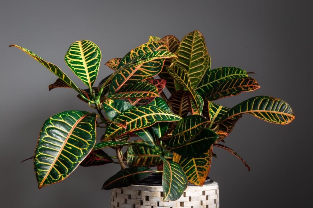 The Best Soil Mix for Croton Plants (Essential Tips)
