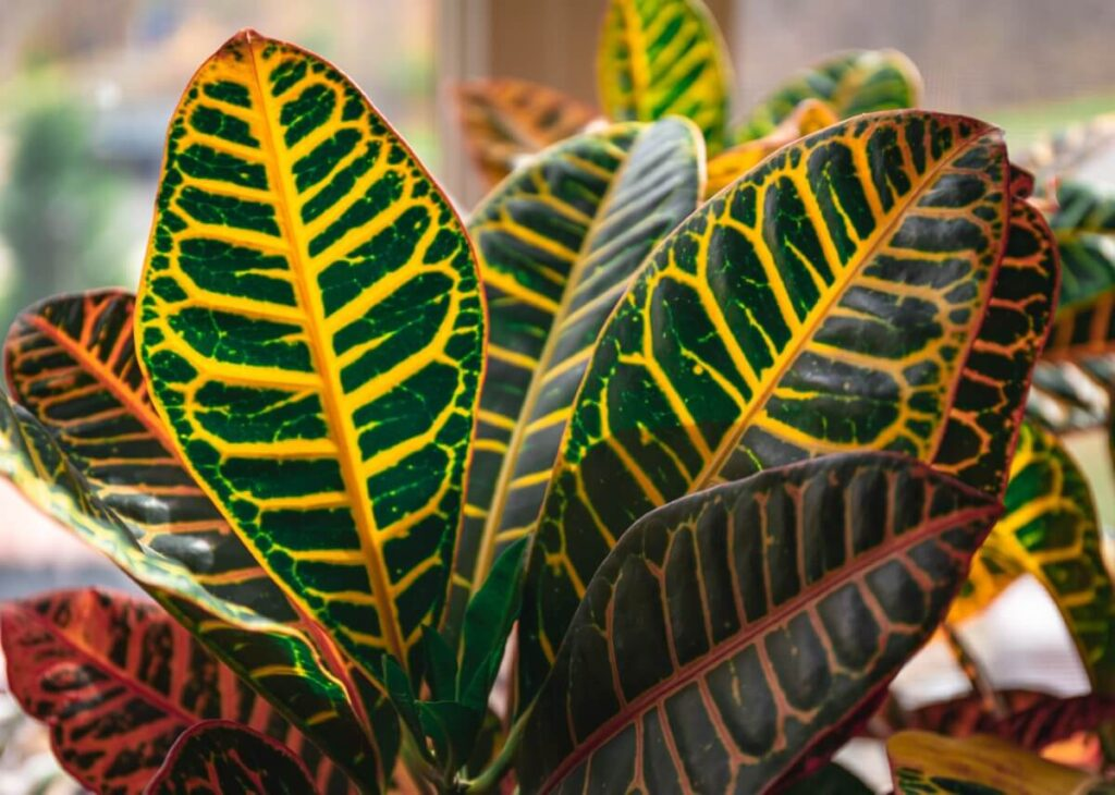 The Importance of Well-Draining Potting Soil for Croton Plants
