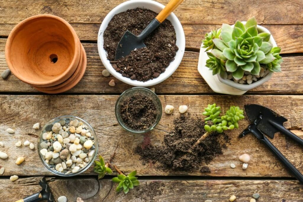 What's the Best Soil Mix for Kalanchoe Pinnata Plants?