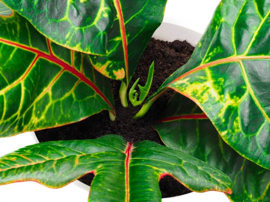 Why Soil is Important for Plant Health
